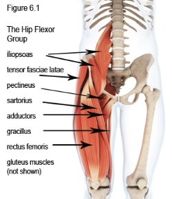 hip flexors and knees